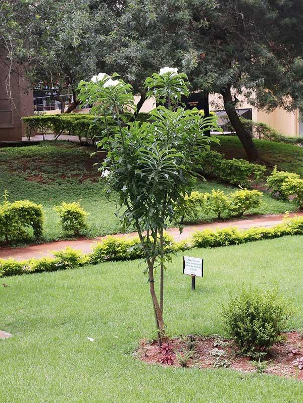 no jardim 1