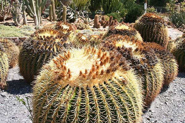 plantas mexicanas
