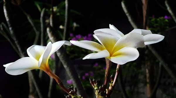tutorial de flores