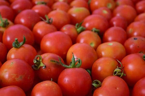 variedades para plantar
