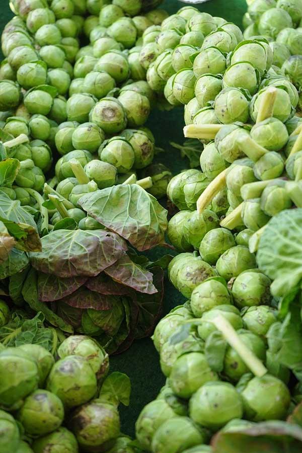 vegetal para cultivar no frio