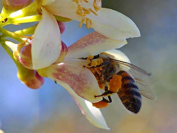 abrigo para abelhas