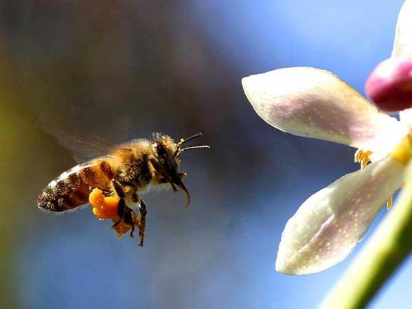 arvores para atrair abelhas