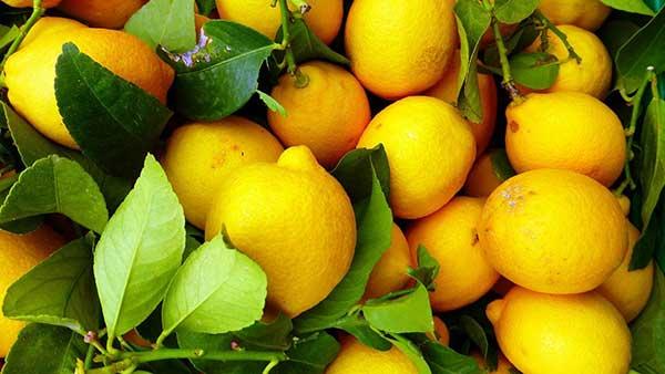 como plantar laranja em casa