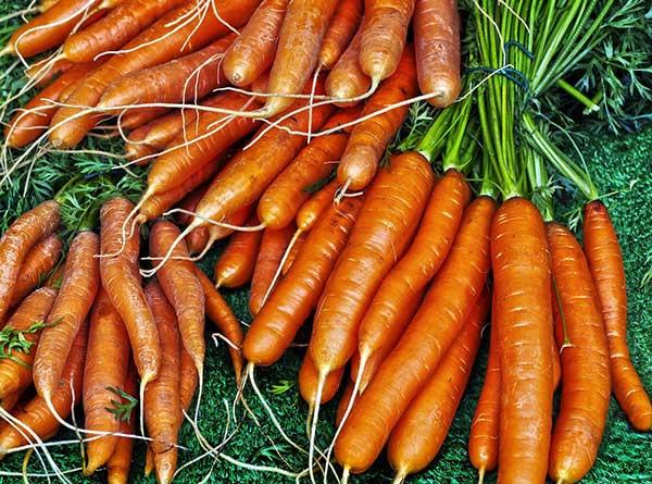 cuidados com cenouras