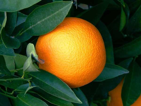fonte de vitamina C