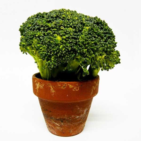 lista de vegetais em vasos