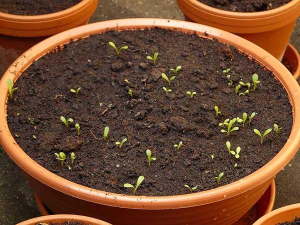 vegetais para cultivar em vasos