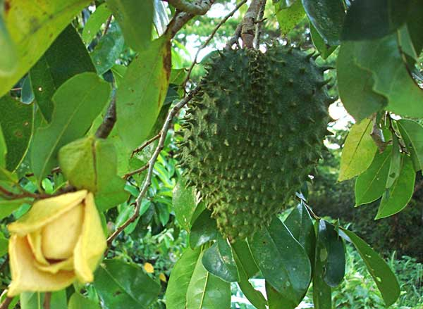flor da planta